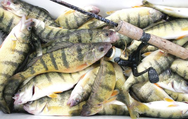 Maumee river and lake erie report july 14 2017 for Ohio fishing report 2017