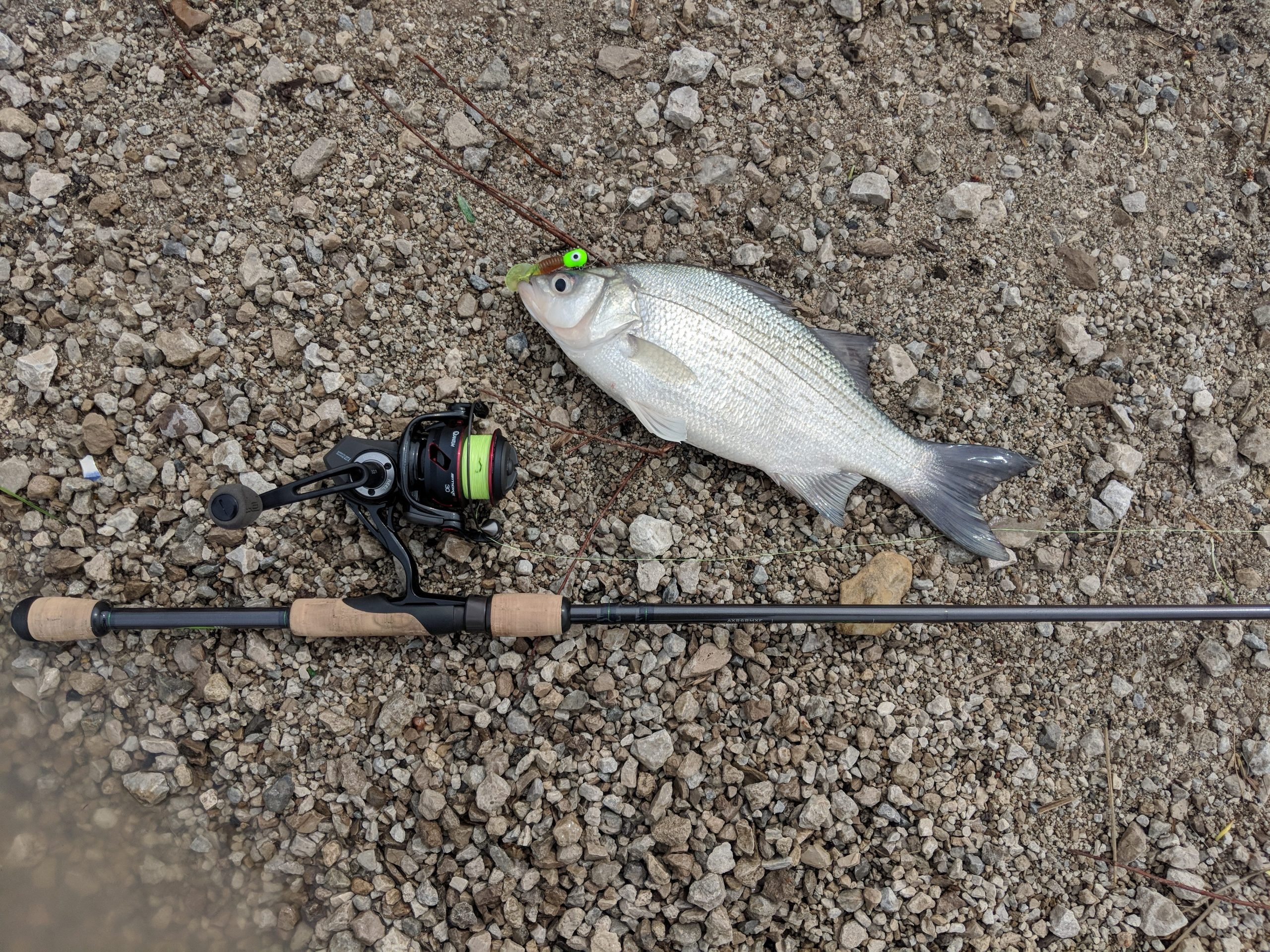 Maumee Tackle 2nd Annual White Bass Tournament- Saturday May 11, 2019