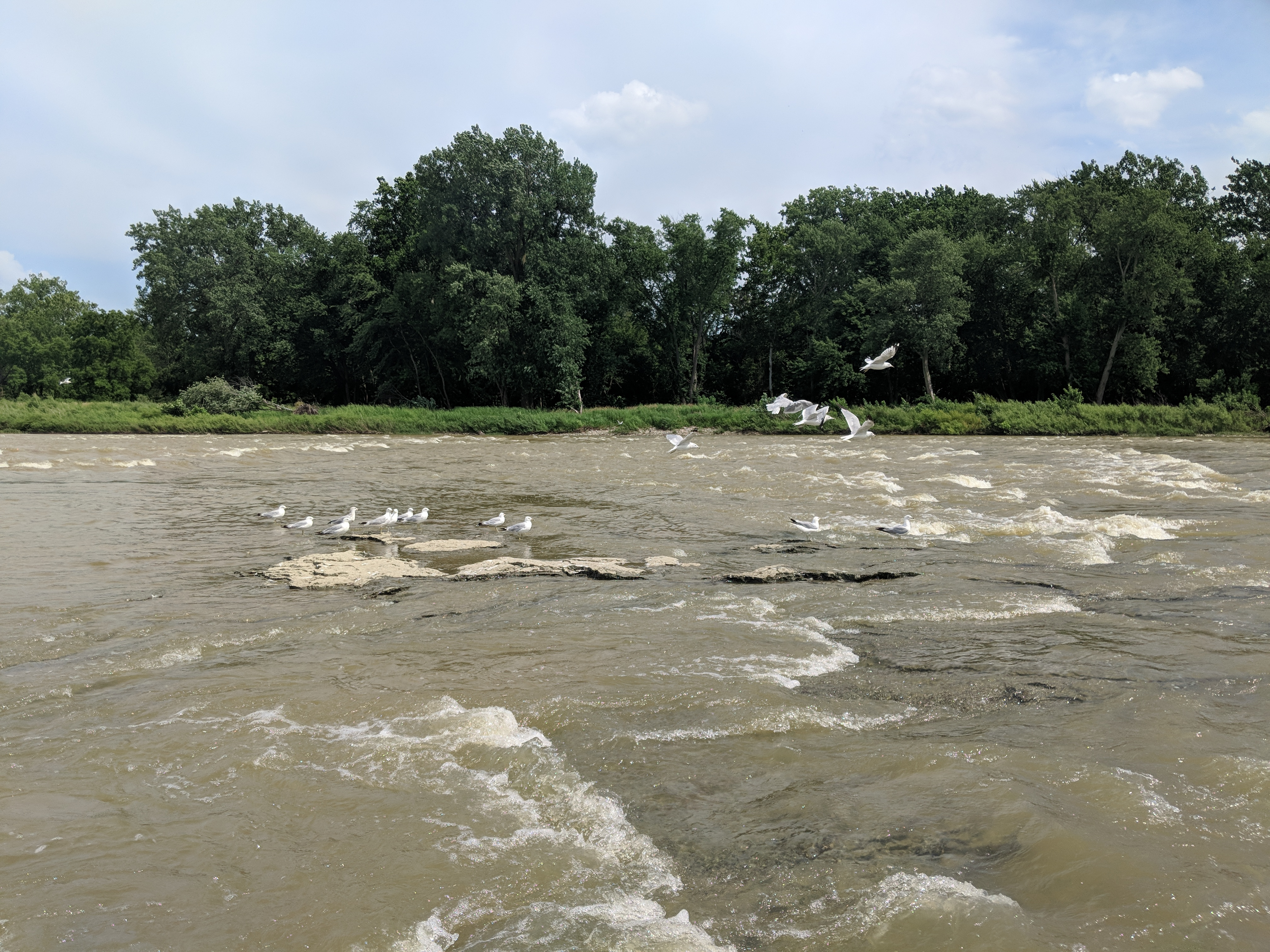 Maumee River Conditions – August 1 , 2019
