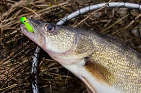 Maumee River Report- 2 December , 2019- OPEN DAILY YEAR AROUND